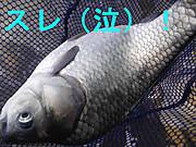 Dscf4922