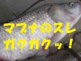 Dscf0674