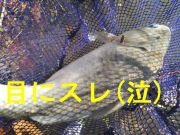 Img_20161219_140828